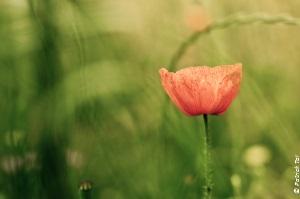 fleur-couleurs-copyright
